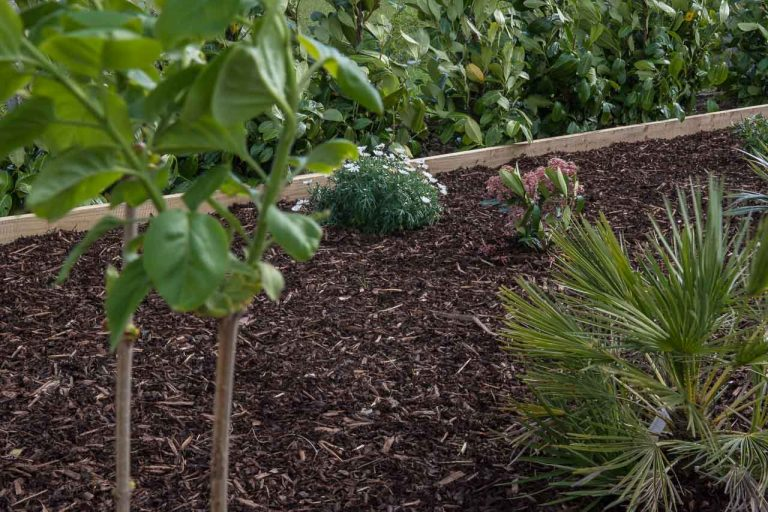 Maddie Dineen Garden Design 161213
