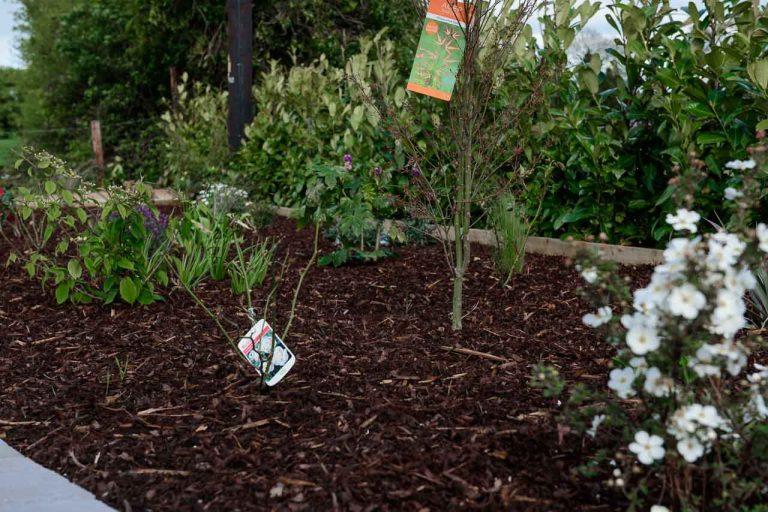 Maddie Dineen Garden Design 162004