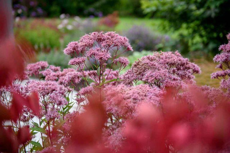 Maddie Dineen Garden Design 26003
