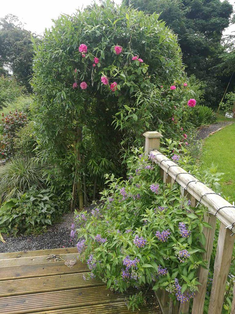 Maddie Dineen Garden Design 15130